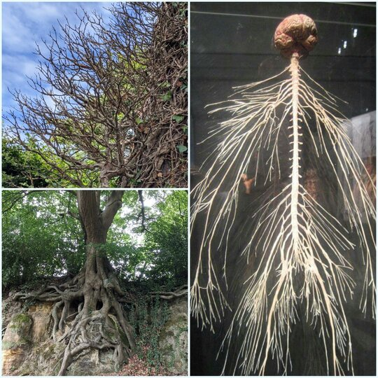 anato_mia radici sistema nervoso
