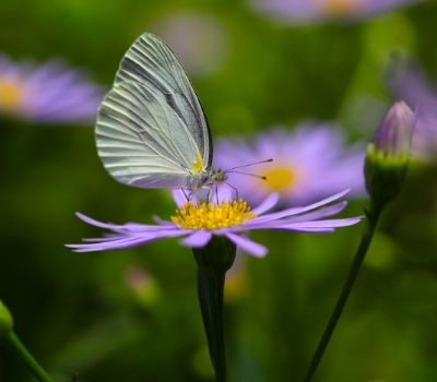 erbe spontanee farfalla fiore