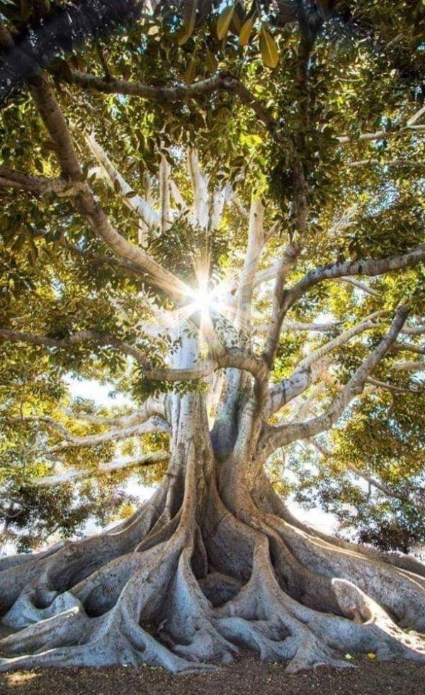rami_albero